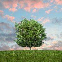 Green Energy in Doveton
